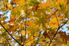 Herbstlaub von Farben Lizenzfreies Stockfoto