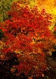 Herbstlaub von verschiedenen Farben Lizenzfreies Stockfoto