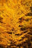 Herbstlaub von verschiedenen Farben Lizenzfreie Stockfotografie