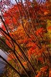 Herbstlaub von verschiedenen Farben Lizenzfreies Stockbild