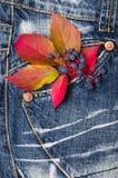 Herbstlaub von wilden Trauben auf Denimbeschaffenheit Lizenzfreies Stockbild