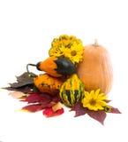 Herbstlaub von wilden Trauben und von Kürbis Stockfotografie