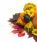 Herbstlaub von wilden Trauben und von Kürbis Stockfoto
