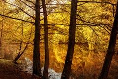Herbstlaub widergespiegelt im Waldteich stockfoto