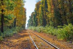 Herbstlaubabdeckungsbahngleise in Neu-England Stockfoto