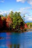Herbstlaubbaum-Seereflexion Lizenzfreie Stockfotografie
