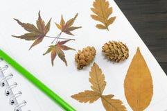 Herbstlaubcollage auf dem Notizbuch Stockbild