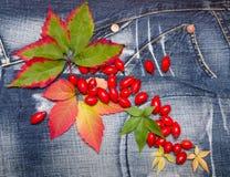 Herbstlaubdenimhintergrund Stockbild