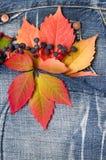 Herbstlaubdenimhintergrund Stockfotos