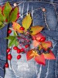 Herbstlaubdenimhintergrund Lizenzfreies Stockbild