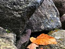 Herbstlaubfall zum Felsen Stockfotos