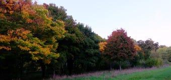 Herbstlaubfarbpracht in der Nachmittagssonne Stockfotos