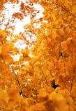 Herbstlaubhintergrund Lizenzfreies Stockbild