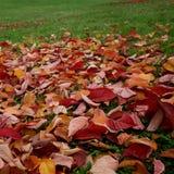 Herbstlaubhintergrund Stockbilder