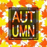 Herbstlaubhintergrund mit Trauerrand Lizenzfreie Stockfotos
