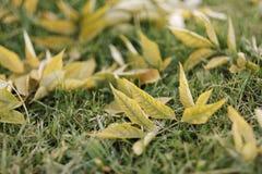 Herbstlaublüge aus den Grund Lizenzfreies Stockbild