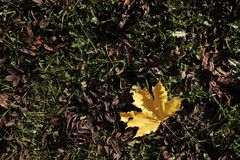Herbstlaublüge aus den Grund Stockbild