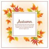 Herbstlaubquadrat Lizenzfreie Stockbilder