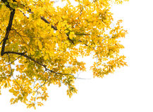Herbstlaubrahmen Stockbild