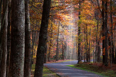 Herbstlaufwerk lizenzfreies stockfoto