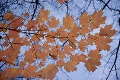 Herbstlich stockfotos