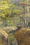 Herbstlich im Park stockfotos