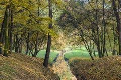 Herbstlich im Park lizenzfreies stockfoto