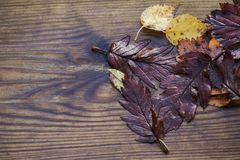 Herbstlich machen Sie schöne hölzerne Hintergrundbeschaffenheit des Blatt-, Roten und Gelbenahornlaubs, selektiven Fokus nass lizenzfreie stockfotografie