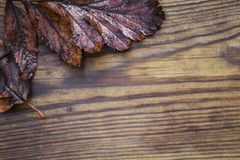Herbstlich machen Sie schöne hölzerne Hintergrundbeschaffenheit des Blatt-, Roten und Gelbenahornlaubs, selektiven Fokus nass stockfotografie