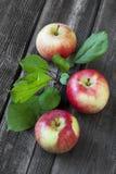 Herbstliche Äpfel, Ernte stockbild
