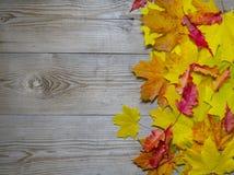 Herbstliche Ahornblätter auf altem hölzernem Hintergrund Stockfoto