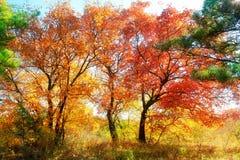 Herbstliche Ahornblattlandschaft Lizenzfreie Stockfotografie