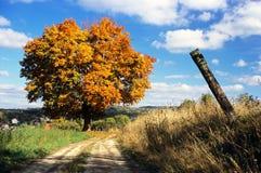 Herbstliche Ansicht des Baums und der ländlichen Straße Lizenzfreies Stockbild