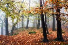 Herbstliche Ansicht des laubwechselnden Holzes Stockfotografie