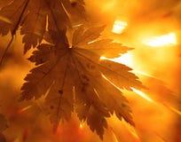 Herbstliche Auslegung Lizenzfreies Stockbild