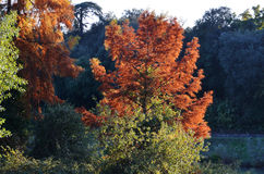 Herbstliche Bäume Lizenzfreie Stockfotografie