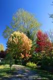 Herbstliche Bäume Lizenzfreie Stockfotos