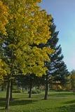Herbstliche Bäume stockbild