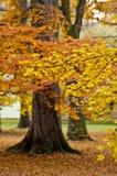Herbstliche Bäume im Park Stockfotos