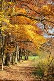 Herbstliche Bahn durch bunte Eichen Lizenzfreie Stockbilder