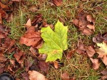 Herbstliche Blätter lizenzfreie stockbilder