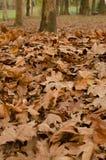 Herbstliche Blätter bei Sonnenuntergang Stockbilder