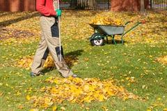 Herbstliche Blätter in einem Garten Stockfotografie