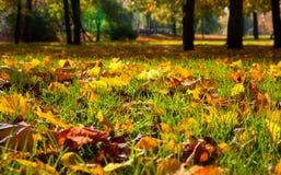 Herbstliche Blätter im Park Stockfotos