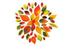 Herbstliche Blume Lizenzfreie Stockfotografie