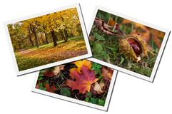 Herbstliche Collage lizenzfreie stockfotos