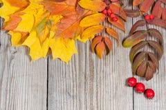Herbstliche Dekoration auf hölzernem Hintergrund Stockfotos