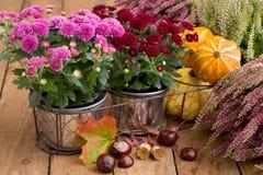 Herbstliche Dekoration mit Heide Stockfotos