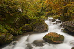 Herbstliche Farben in den französischen Pyrenees Stockfotos