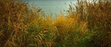 Herbstliche Farben im Schilf lizenzfreie stockfotos